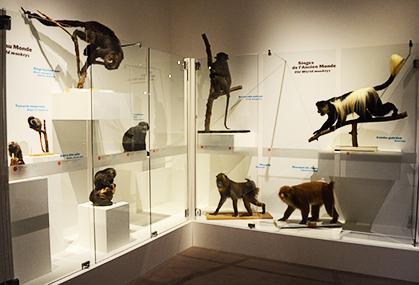 Les grands singes sont différents des autres primates.