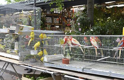 419marche aux oiseaux DG612