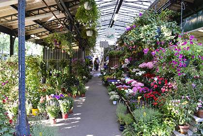 419marche aux fleurs DG423