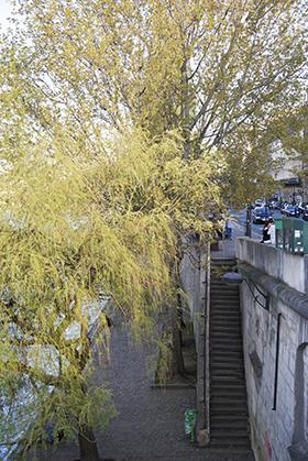 Depuis les quais les arbres se penchent vers la Seine.