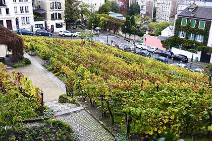 Une vigne clôturée